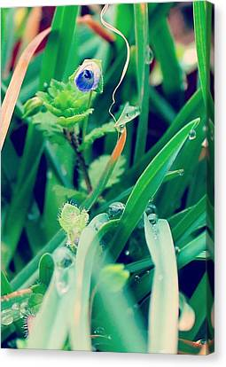 Canvas Print featuring the photograph Rain Flower by Candice Trimble