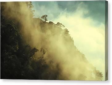 Rain Forest Borneo Canvas Print