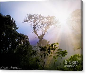 Rain Forest Sun Canvas Print