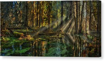 Rain Forest Sunbeams Canvas Print by Mary Jo Allen