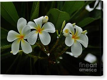 Rain Kissed Plumeria Canvas Print