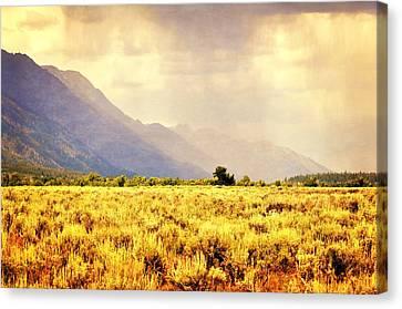 Rain On The Sagebrush Canvas Print by Marty Koch