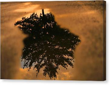 Rain Puddle Reflection At Sunset Canvas Print by Dan Sproul