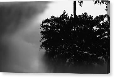 Rain Puddle Reflection Black And White Canvas Print by Dan Sproul