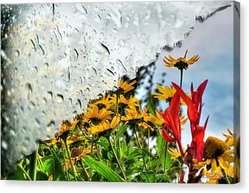 Rain Rain Go Away... Canvas Print