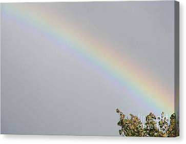 Canvas Print featuring the photograph Rainbow After The Rain by Barbara Griffin
