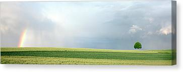 Rainbow And Storm Clouds Over A Field Canvas Print by Panoramic Images