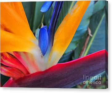 Canvas Print featuring the photograph Rainbow Bright by Kristine Merc