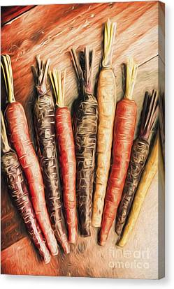 Rainbow Carrots. Vintage Cooking Illustration  Canvas Print by Jorgo Photography - Wall Art Gallery