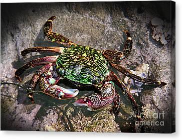 Rainbow Crab Canvas Print by Mariola Bitner