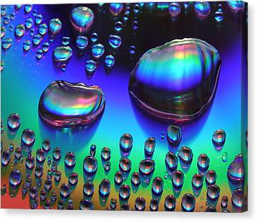 Rainbow Dew Drops Canvas Print by Shannon Story