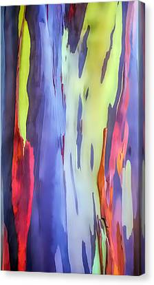 Rainbow Eucalyptus 2 Canvas Print by Dawn Eshelman
