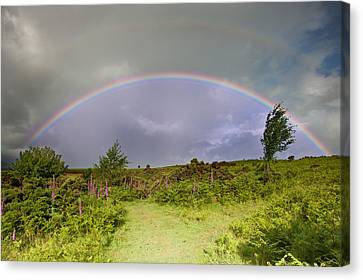 Rainbow In Stromy Sky Above Landscape Of Foxgloves Canvas Print