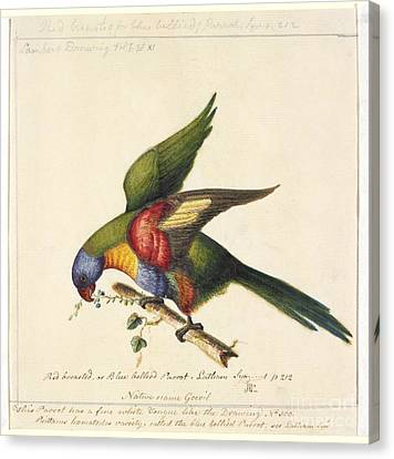 Rainbow Lorikeet, 18th Century Canvas Print by Natural History Museum, London
