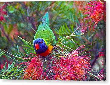 Rainbow Lorikeet I Canvas Print by Cassandra Buckley