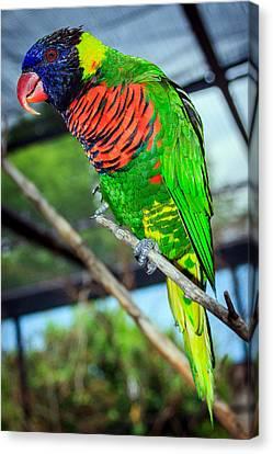Canvas Print featuring the photograph Rainbow Lory by Sennie Pierson