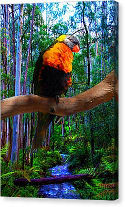 Rainbow Of The Forest Canvas Print