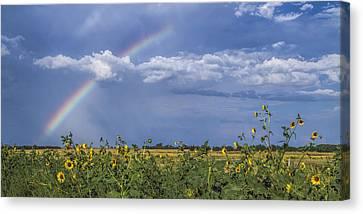 Rainbow Over Sunflowers Canvas Print