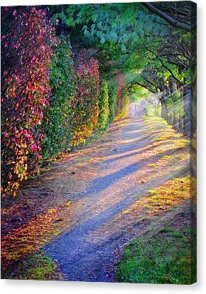 Rainbow Path Canvas Print by William Schmid