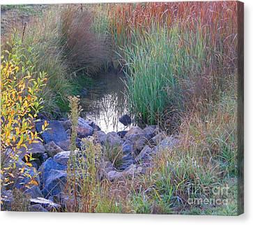Rainbow Pond Canvas Print