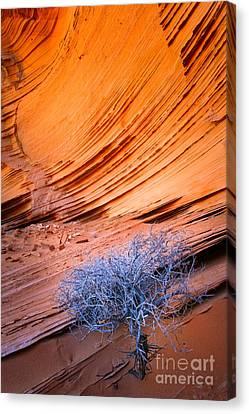 Rainbow Rocks Dead Bush #1 Canvas Print