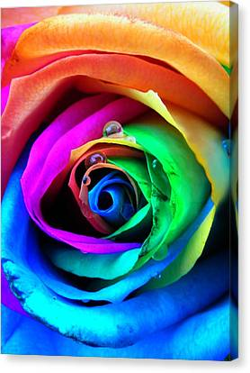 Raindrop Canvas Print - Rainbow Rose by Juergen Weiss