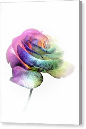 Rainbow Rose Canvas Print by Marianna Mills
