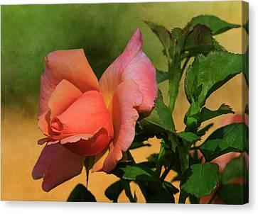 Canon 7d Canvas Print - Rainbow Sherbert by Donna Kennedy