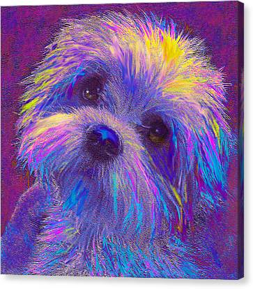 Rainbow Shih Tzu Canvas Print by Jane Schnetlage