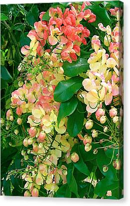 Rainbow Shower Tree Canvas Print by James Temple