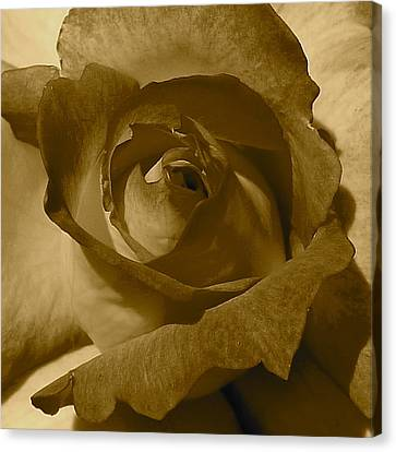 Rainbow Sorbet Rose In Sepia Canvas Print by Denise Mazzocco