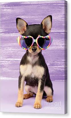 Rainbow Sunglasses Canvas Print