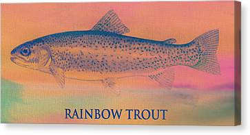 Rainbow Trout Canvas Print by Dan Sproul