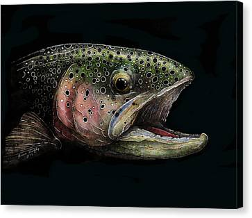 Rainbow Trout Head Shot #1 Canvas Print by Brian Murphy