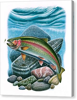 Rainbow Trout Vignette Canvas Print by Jon Q Wright