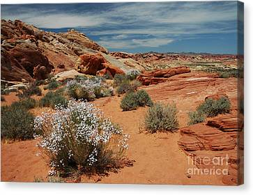 601p Rainbow Vista In The Valley Of Fire Canvas Print by NightVisions