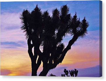 Rainbow Yucca Canvas Print by Angela J Wright