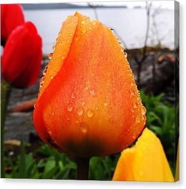 Canvas Print featuring the photograph Raindrop Tulip by Karen Horn