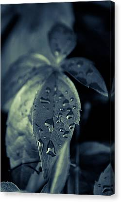Raindrops Canvas Print by Andreas Levi
