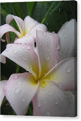 Raindrops Canvas Print by Beth Vincent