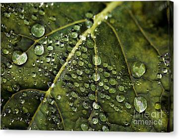 Canvas Print featuring the photograph Raindrops by Dennis Bucklin