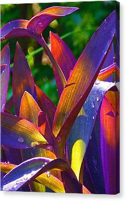 Raindrops On Colored Leaves Canvas Print by Margaret Saheed