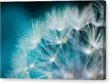 Raindrops On Dandelion Sea Blue Canvas Print