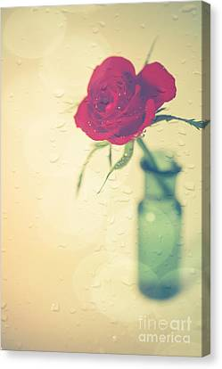 Raindrops On Roses . . . Canvas Print by Jan Bickerton