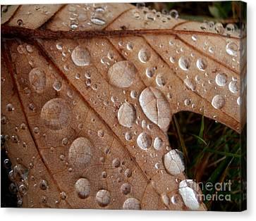 Raindrops  Canvas Print by Steven Valkenberg