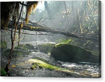 Rainforest Stream Canvas Print by Stefan Carpenter