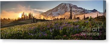 Rainier Golden Light Sunset Meadows Canvas Print