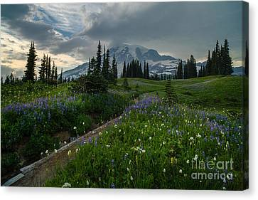 Rainier Meadows Wandering Canvas Print by Mike Reid