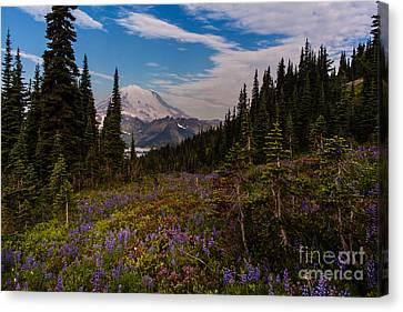 Rainier Tipsoo Wildflowers Canvas Print by Mike Reid