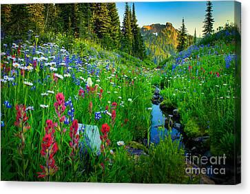 Rainier Wildflower Creek Canvas Print by Inge Johnsson